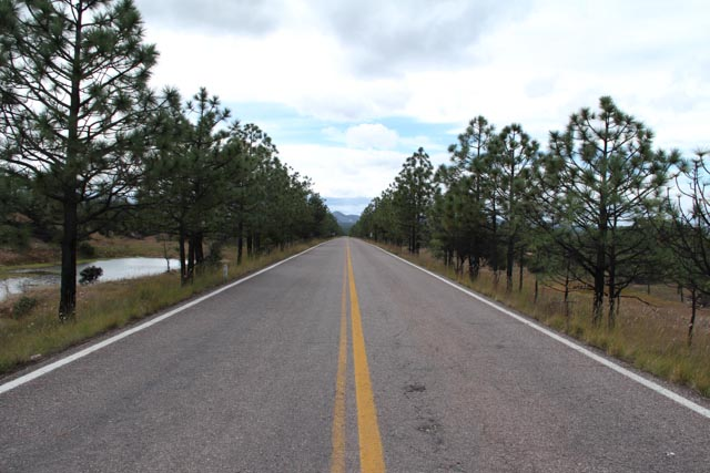 Plenty of long straight aways. These short pine trees reminded me of the Pine Barrens in New Jersey.